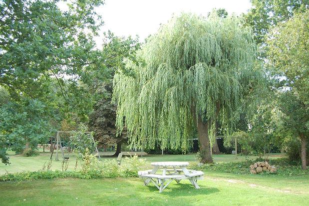 Hængepil i den gamle have.jpg