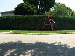 Bush & Hedge Trimming