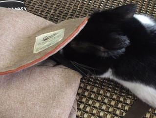 猫さんもいい香りが好き❤