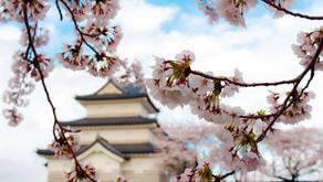 桜も満開、春の写真を追加しました。
