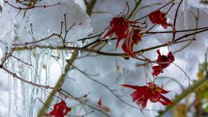 新潟市は8年振りの大雪です。