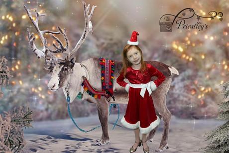 06 - Forrest Reindeer