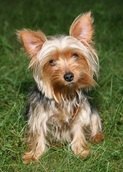 Pet Photography   Lynnfield, MA