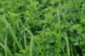 Grass Legume Mix.jpg
