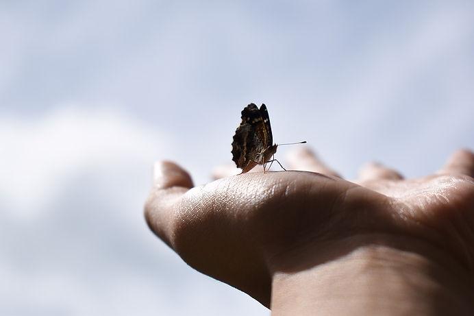 butterfly-2646113_960_720.jpg