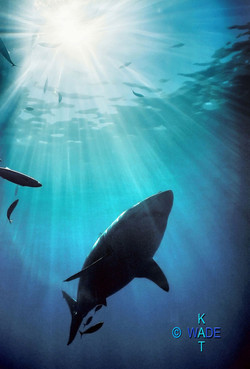 WARNING SHARKS 08