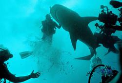 WARNING SHARKS 05