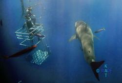 WARNING SHARKS 09