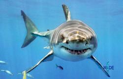 WARNING SHARKS 10