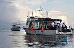 WARNING SHARKS 03