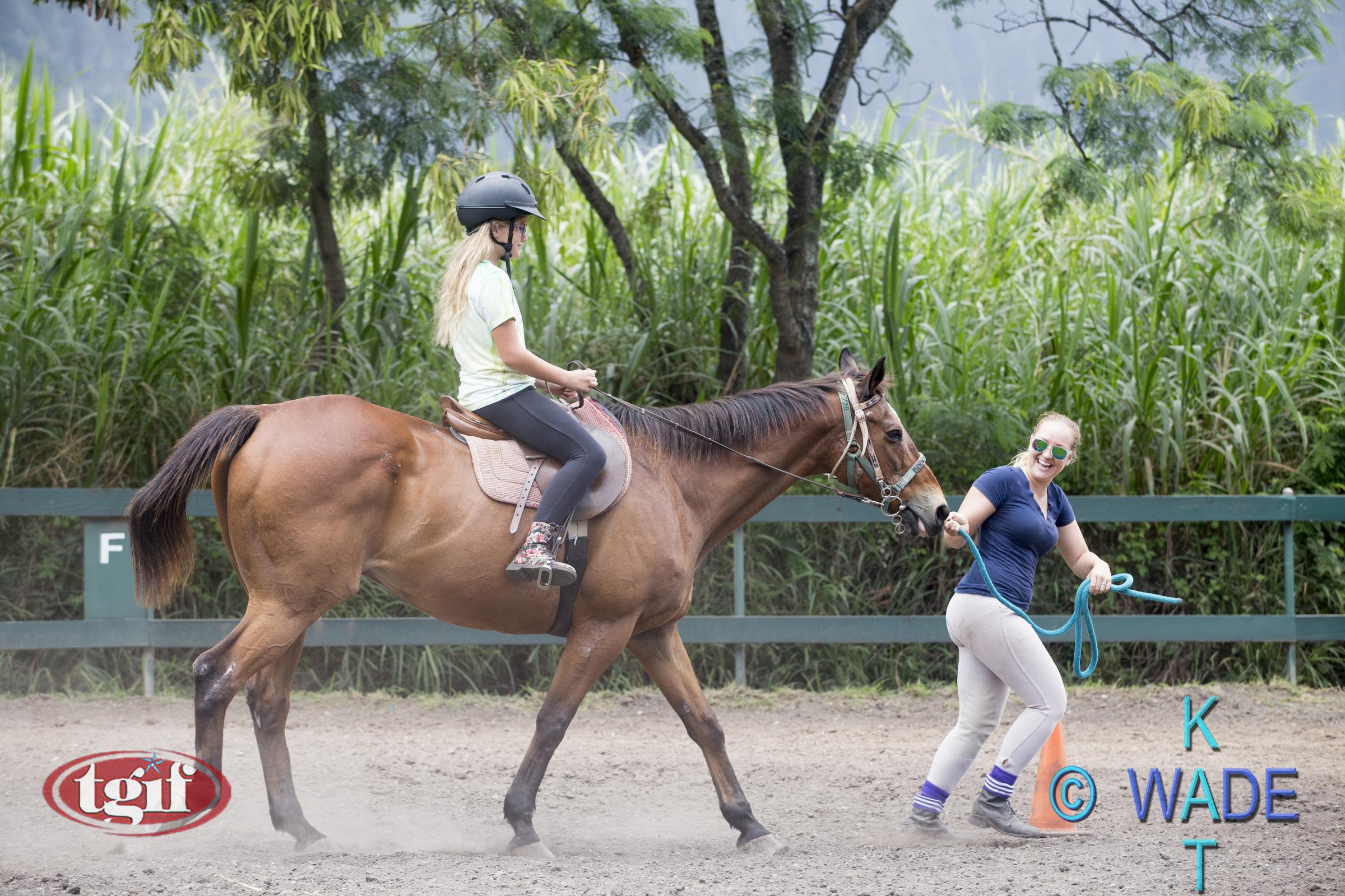TGF HORSE SHOW 28A