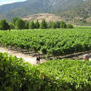 Vinícolas no Chile: a clássica Concha Y Toro