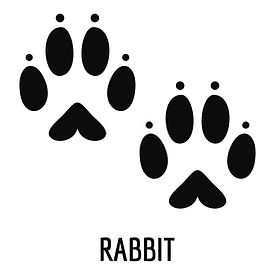 Know Why Rabbits are Considered as Lucky Charm for Some while Some Consider as Symbol of Dark Force