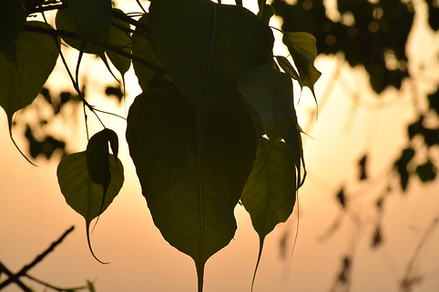 Does Devas Resides in Peepal Tree or Is It a Dwelling Place of Ghost. Read This to Discover!
