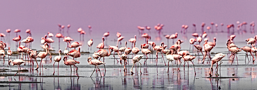 Can birds be transformed into stones? Explore the secrets of Africa's Lake Natron