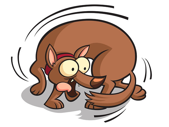 Why Do Dogs Chase Their Tail? Do They Need Attention? Know The Reasons behind it!
