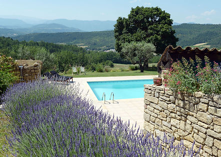 Lavenders & the pool.JPG