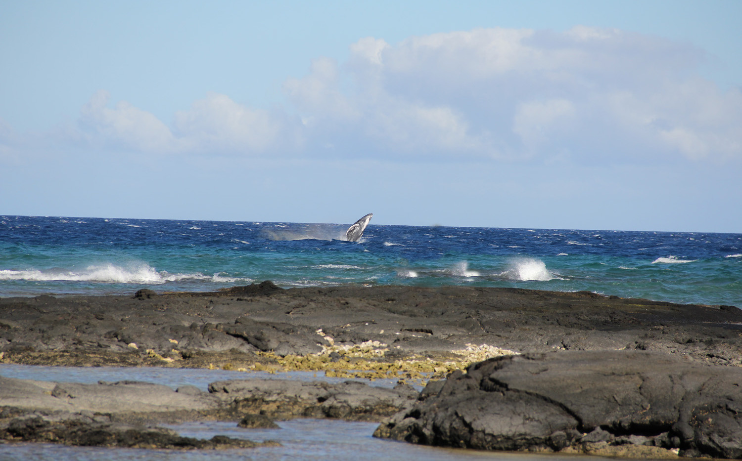 Great whale viewing during whale season