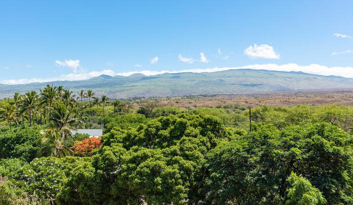 Kohala Mountain Views