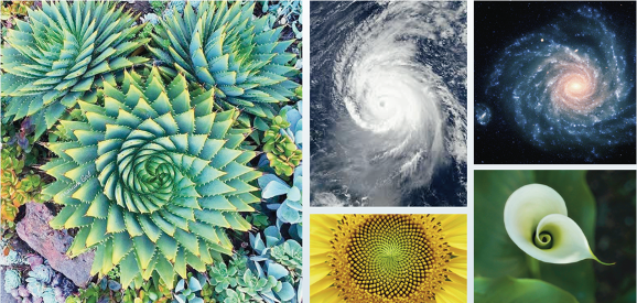 Wonderful Natural Examples of the Golden Ratio