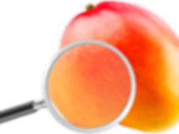 Dizteca round mango