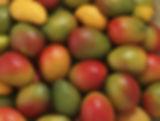 Diazteca mango page