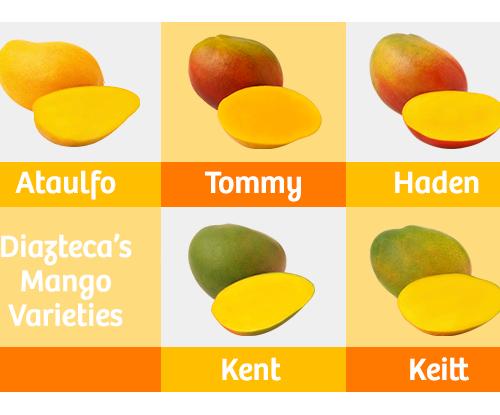Dizteca's mango varieties