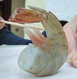 top shrimp.png