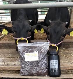 トリニティーZで牛糞が堆肥に!
