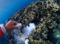 トリニティーZで珊瑚再生