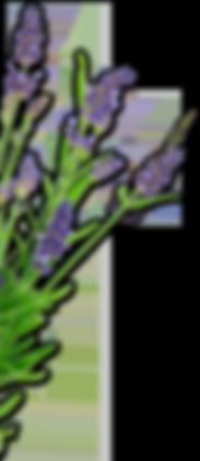 Lavender Valley Acres