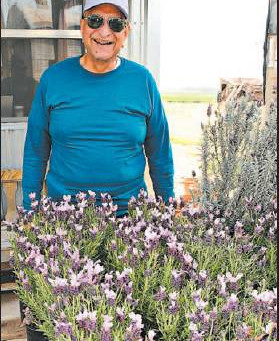 Lavender Valley invites all to enjoy weekend open house (The Lawton Constitution)