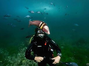 Stunning dive with this very friendly Sa