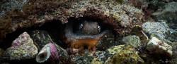 Octopus_Cave