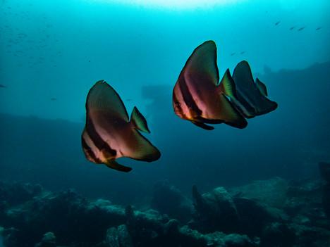 Bat Fish Wreck.jpg