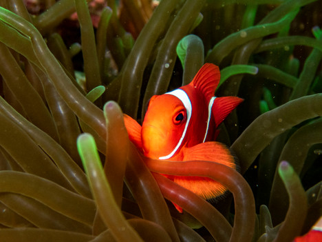 Cloun fish4.jpg