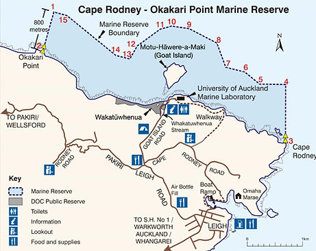 Goat Island Marine Reserve, snorkel dive