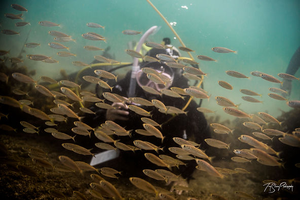 Diving with marine life at Goat Island New Zealand
