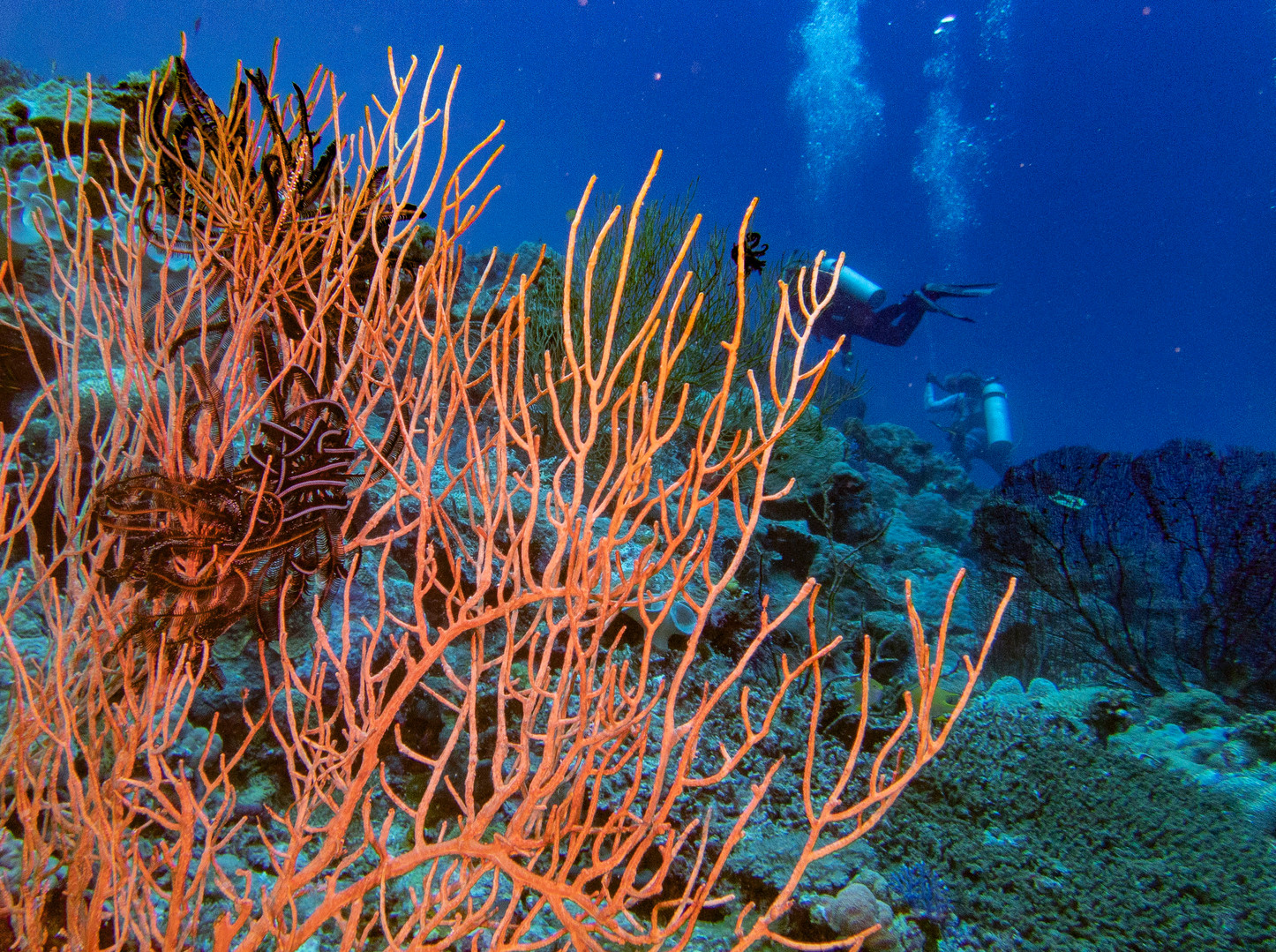 Tropical Divers2.jpg
