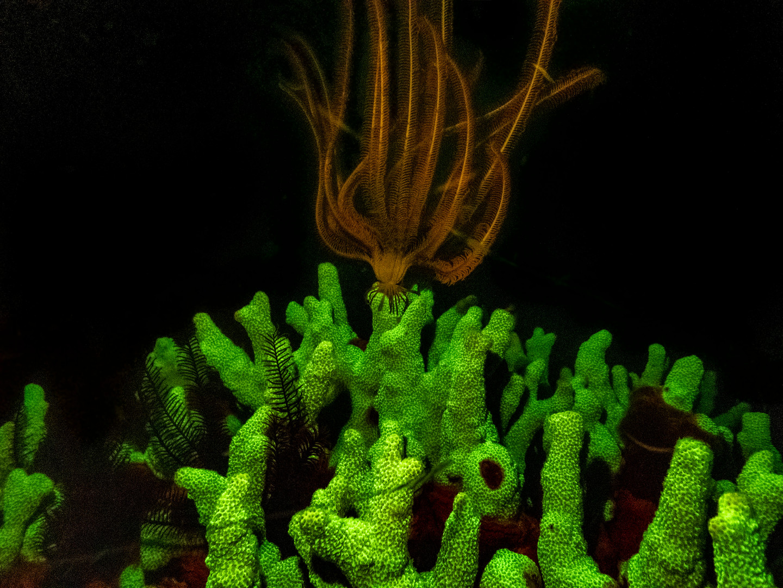 flurecent nidgt diving fan.jpg