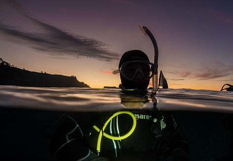 night diving goat island marine reserve