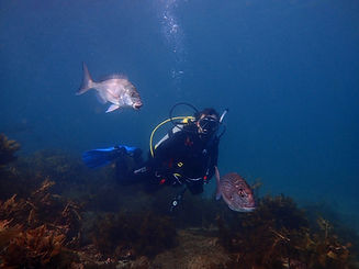 Close incounters with snapper, Goat Island