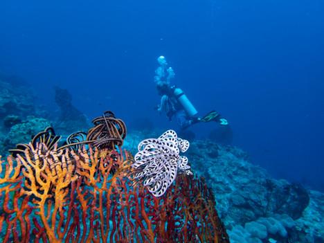 coral_diver_starfish.jpg