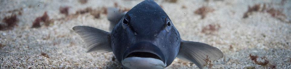 underwater naturalist, marine ecology