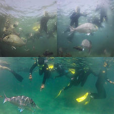 Guided Snorkel Tour with _goatislanddive