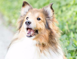 Dogs learn quickly and happily with positive training.