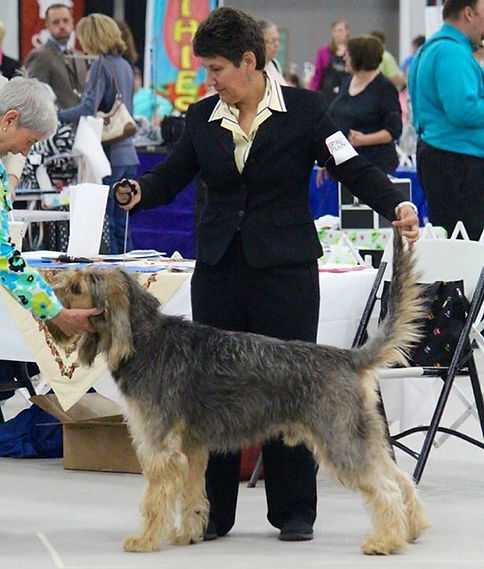 Alison Rosenberg competes with Adler in the National Otterhound Specialty