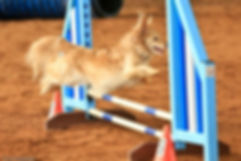 Murry competes in agility
