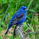 Blue Mountain Avian Seekers.jpg