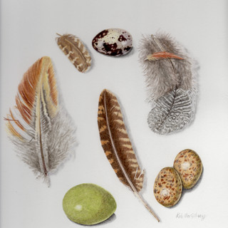 Peak District Feathers and Eggs *SOLD